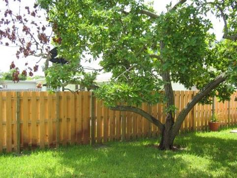 Residential Shadow Box Fence